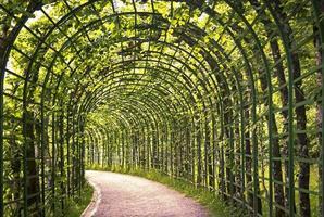 vacker grön arkad foto