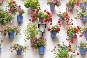 blå blomkrukor och röda blommor på en vit vägg