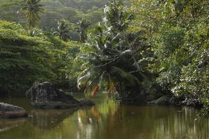 palmträd som hänger över en sjö foto