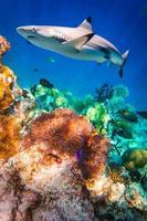 tropiskt korallrev. foto
