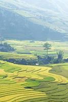 risfält på terrasserad av mu cang chai