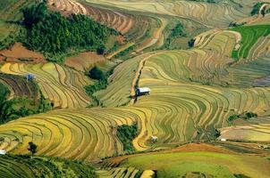risfält av terrasser i Vietnam foto