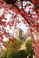 Paris, Notre Dame-katedralen med blommat träd i Frankrike foto