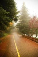 skogsväg foto
