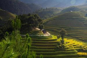 risfält på terrasserade i Vietnam