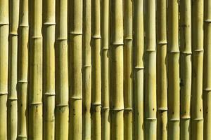 bambu bakgrund