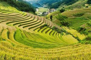 risfält på terrasserad av mu cang chai, yenbai, Vietnam
