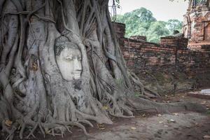 buddhahuvud i rotträd i ayutthaya thailand. foto