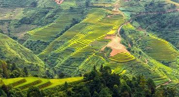 terrasserade fält på kullarna i ha giang, Vietnam