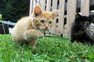 två unga katter foto