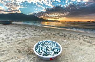 mässingsfisk som skördas på morgonen gryningen foto