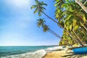 solig sommardag med kokosnöt vid stranden i Binh Thuan foto