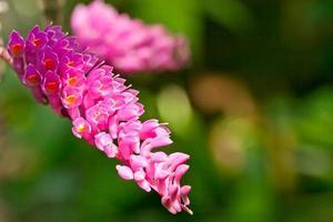thailändsk orkidé foto