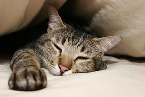 kattunge ledig foto