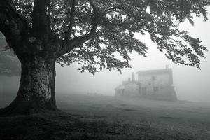 mystiskt hus i dimmig skog foto
