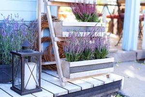 blommande lyngkalluna vulgaris foto