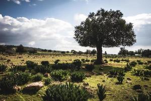 enda träd i grönt fält foto