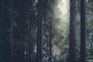 dimmig skog i Tjeckien foto