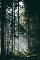 dimma dränkta skogen i Tjeckien foto