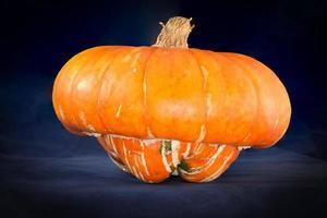 orange turban squash foto