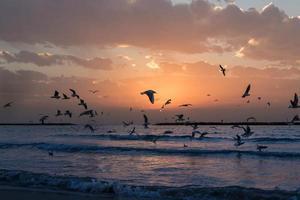 fåglar som kuster en strandlinje vid solnedgången foto