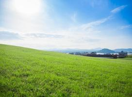 gröna gräsfält foto