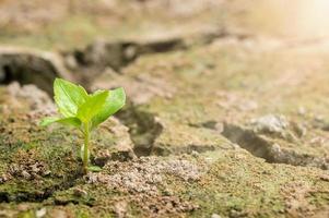 ett enda träd växer ur torr jord foto