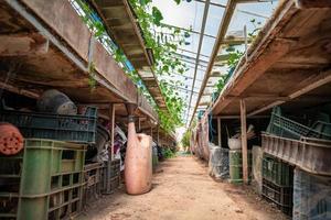 inre utsikt över växthus med verktyg foto
