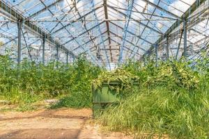 ett växthus i produktion på solig dag foto