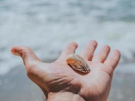 snäckskal i handen