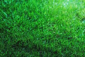 grönt gräs bakgrund