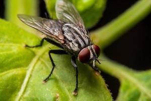 närbild av en makrofluga på blad foto