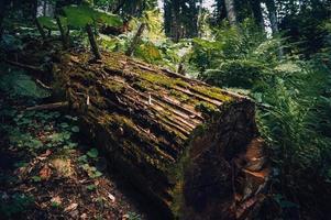 trädstam i bevuxen skog foto