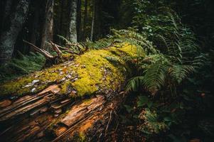 fallet träd i skogen foto