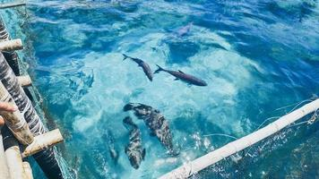 grupp fisk i en fiskpenna foto