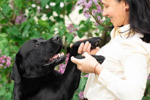 svart labrador retriever med ägaren foto