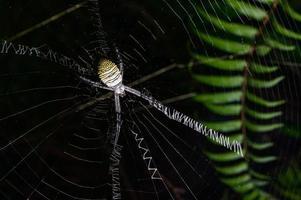 spindel på nätet i naturen foto