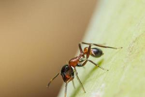 makro spindel på växten foto