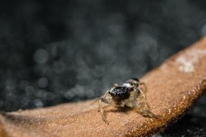 makro spindel på torr kvist foto