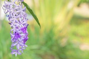 lila blommor i trädgården