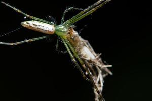 makro spindel på blad foto