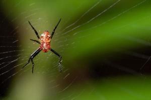 makro spindel i naturen