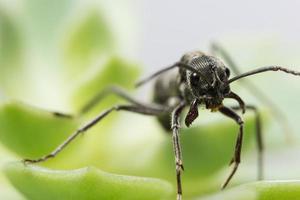 närbild av svart myra på bladet foto