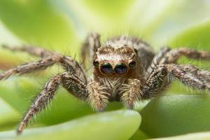 makro spindel på nära håll foto