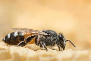närbild av bi i bikupa foto