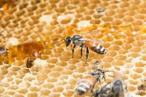 honung och bi i bikupa foto
