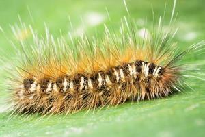 närbild av larven