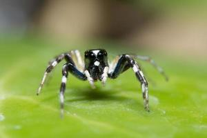närbild av spindeln på grönt blad foto