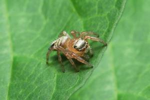 närbild av spindeln på bladet foto