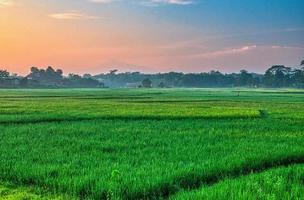 grönt gräsfält med solnedgång foto